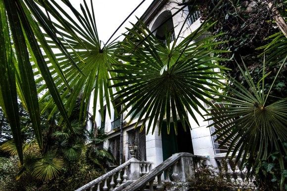Palmės prie įėjimo