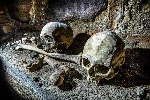 Didikų kaukolės