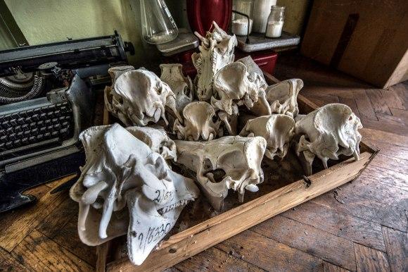 Kaukolės