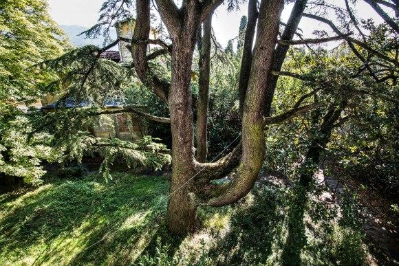 Apleista ligoninė - medžiai