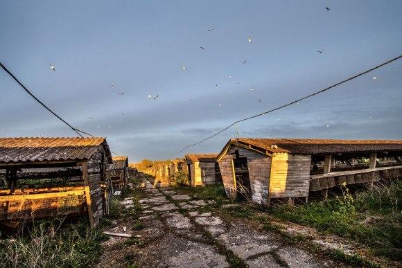 Saulė virš veisyklos namelių